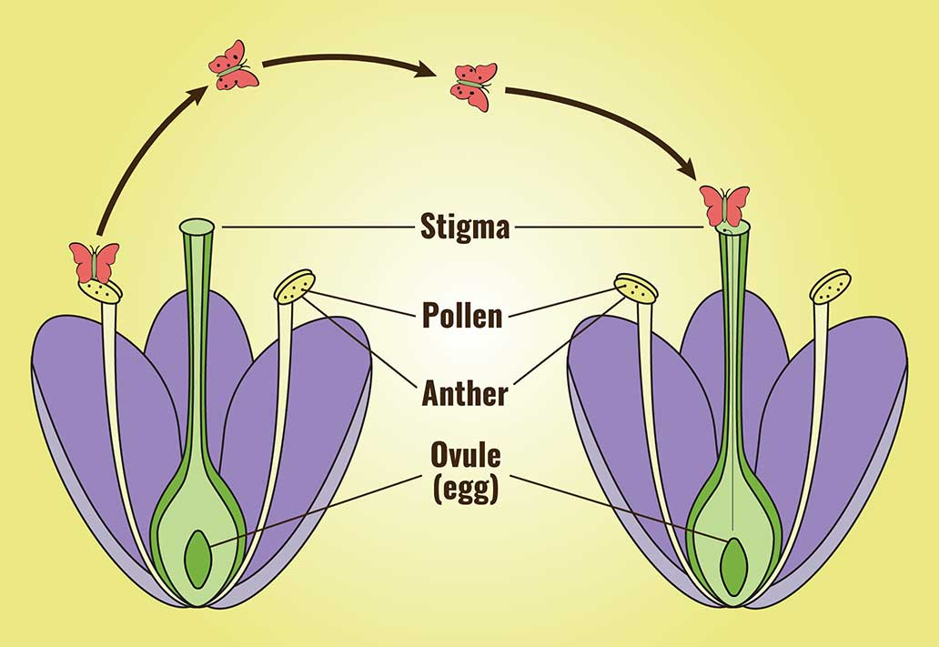 Free Diagram Of Plant Reproduction, Free, Free Engine ...