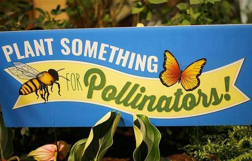 Plant Something for Pollinators at the Boston Flower & Garden Show