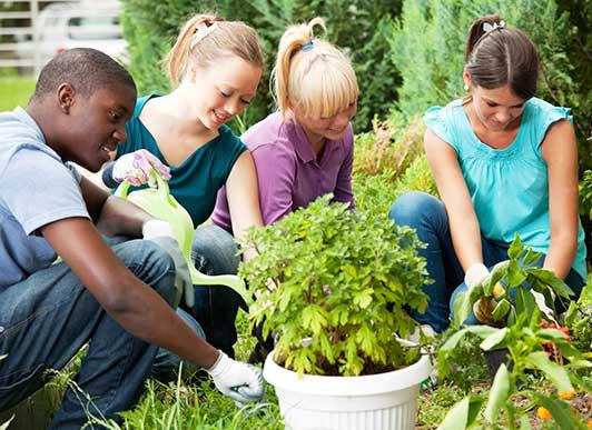 Millennials planting