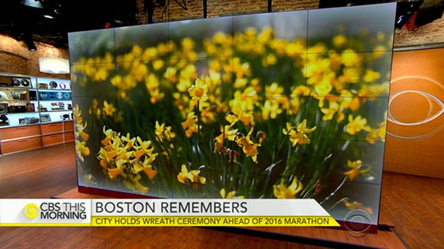 CBS This Morning, Plant Something MA daffodils
