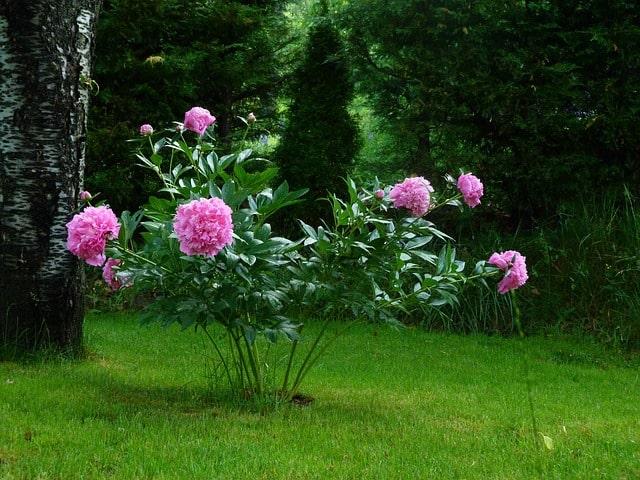 flowers-361822_640