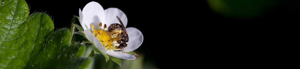 Plant for Pollinators - Plant Something MA Plant Something MA