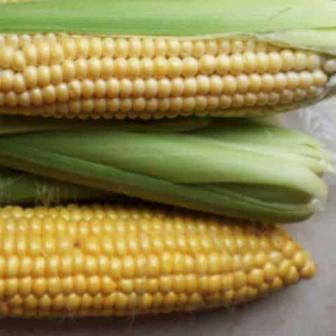 Growing tip: Sweet Corn