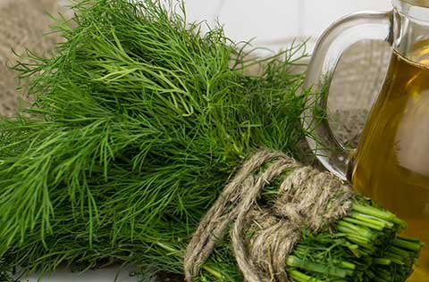 Fresh dill will keep in the freezer for six months.