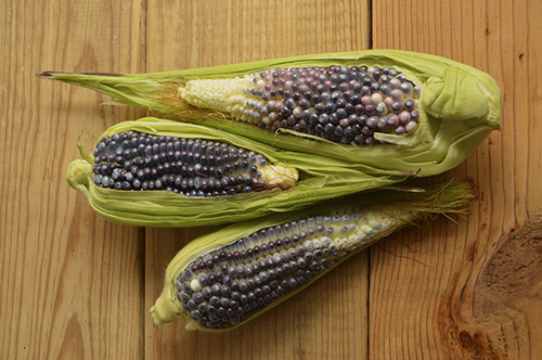 Next year, grow popcorn with a fun seed color: pink, red, black or blue.