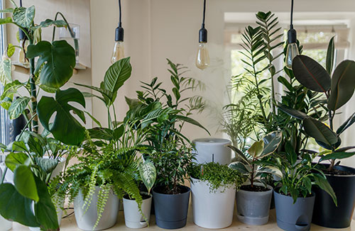 Misting houseplants to increase humidity doesn't work well and may promote diseases.