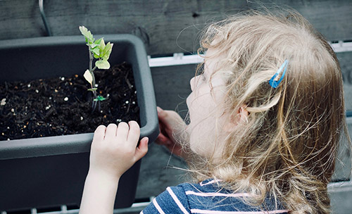 Donate old viable seeds to a seed library or youth gardening program.