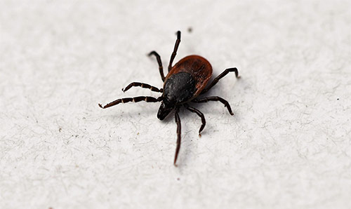 Do routine body checks for ticks after working outdoors.
