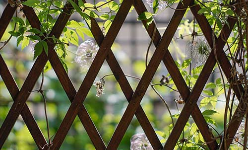 Grow up! Create a trellis or structure to support vining crops.