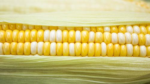Sow sweet corn.