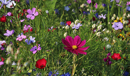 Attract pollinators with showy flowers as well as a variety of shapes, sizes and colors.