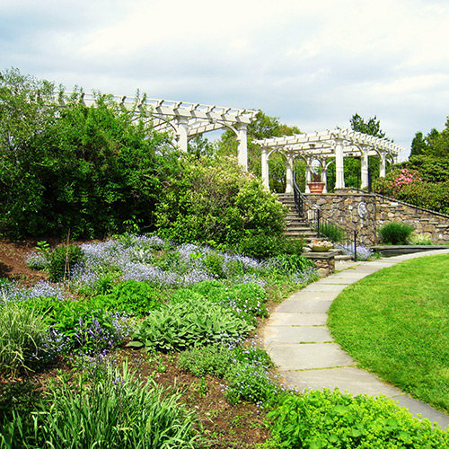 Visit local public gardens to get ideas for landscaping with new or underused plants.
