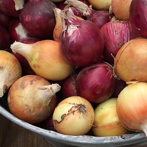 White varieties of onions don't store as well as red or yellow varieties.