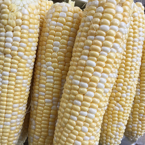 Preserve sweet corn by cutting barely cooked kernels off the cob and freezing in bags.