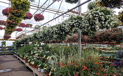 Check local garden centers for end-of-season plant and other sales.