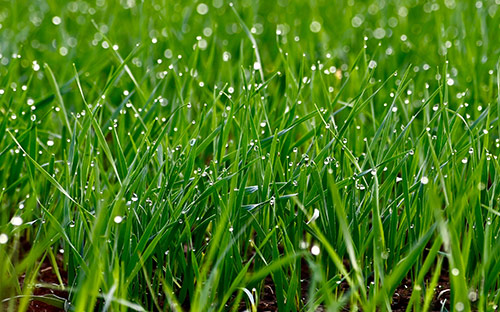 Now is the most important time for lawn fertilization.