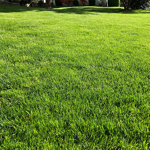 Lime can be applied to lawns any time that the soil is not frozen.